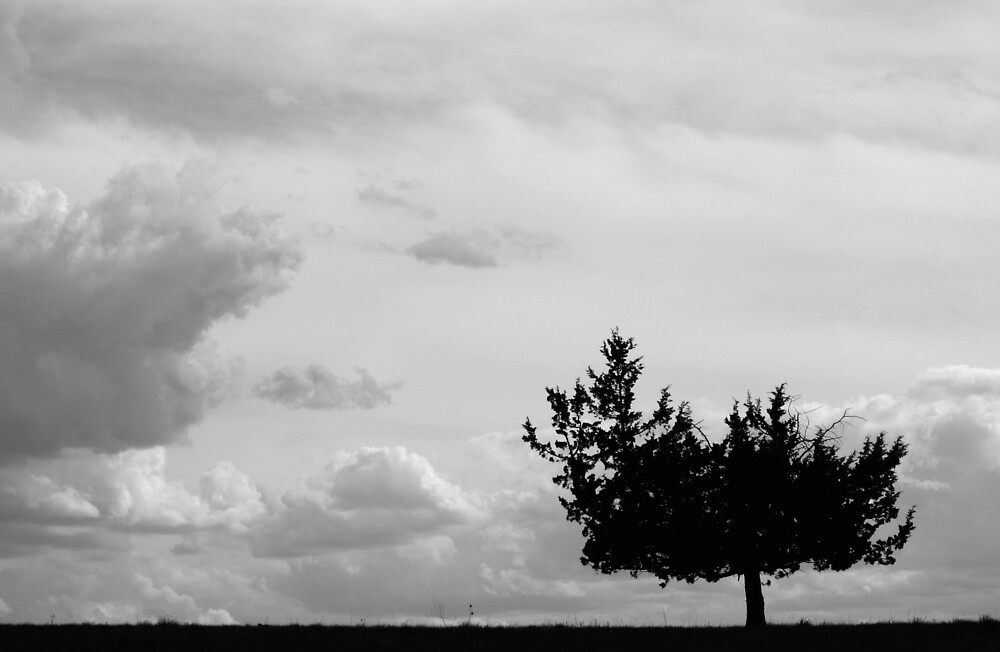 Lonely Tree by Calvin Hanson