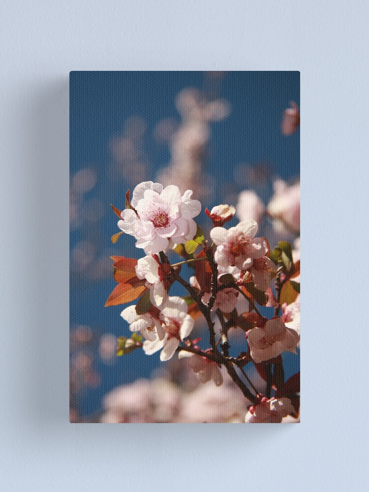 Alternate view of Almond blossoms Canvas Print