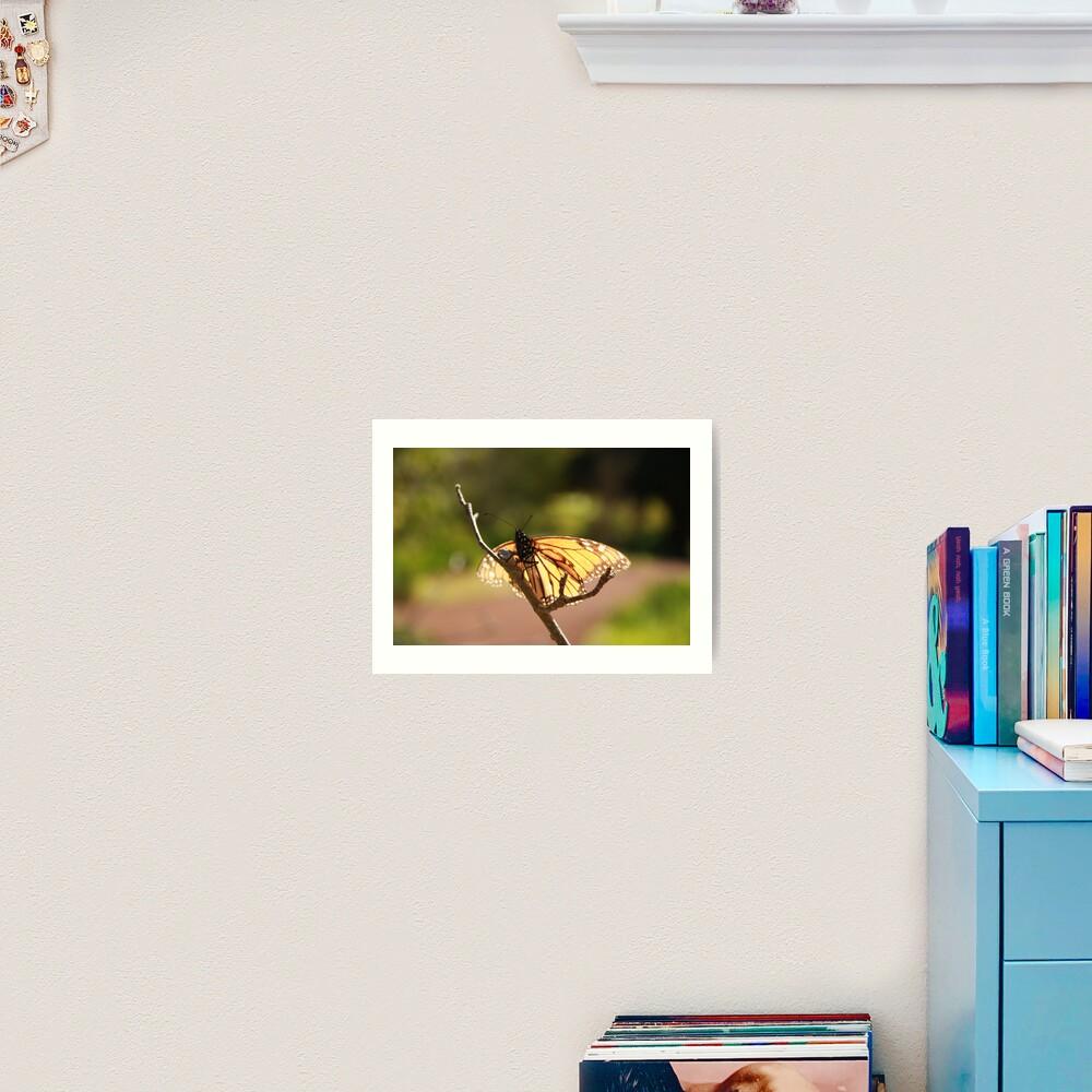 Butterfly at Araluen Art Print