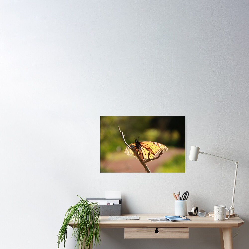 Butterfly at Araluen Poster
