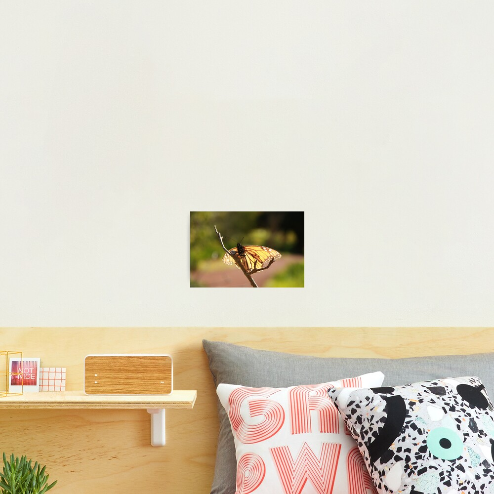 Butterfly at Araluen Photographic Print