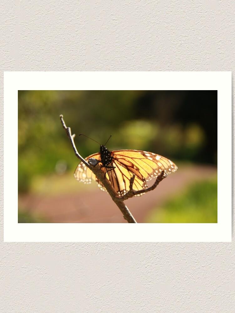 Alternate view of Butterfly at Araluen Art Print