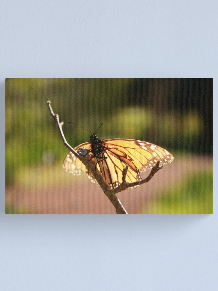Alternate view of Butterfly at Araluen Canvas Print
