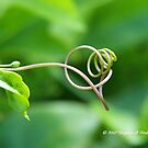 Natures Art by Virginia N. Fred