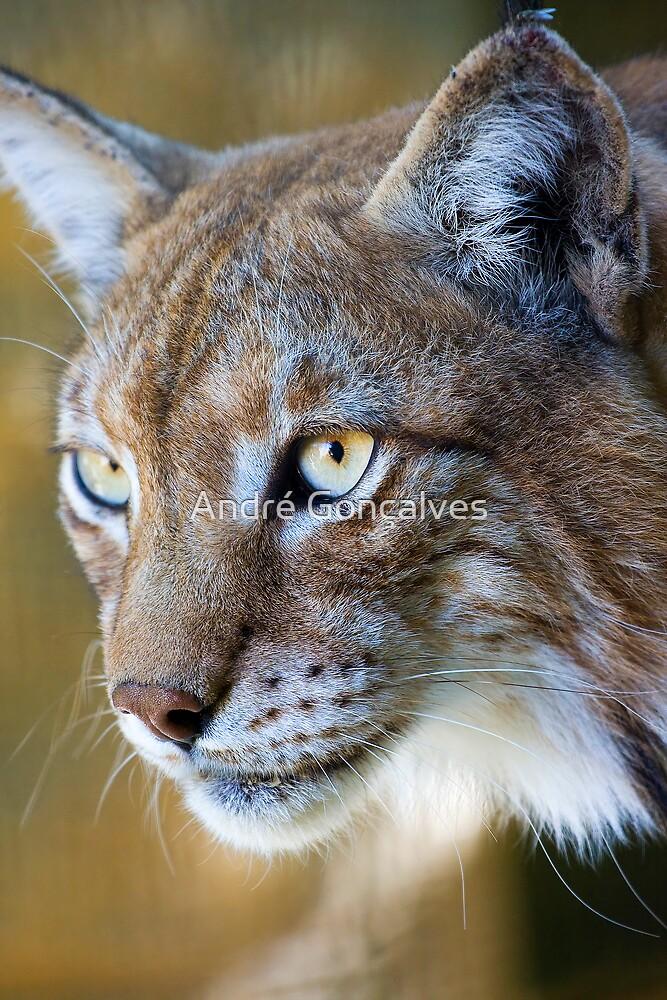 European Lynx by André Gonçalves