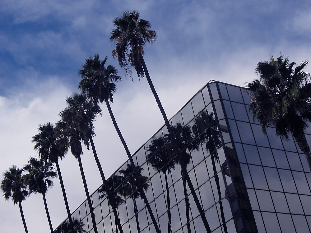 Palm Trees and Office Building by donnagrayson