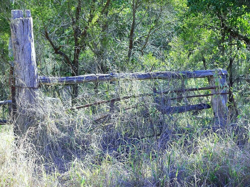 Woodern Fence by Tim Everding