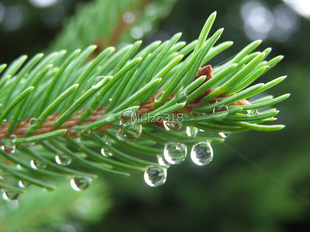 Pine Drops by Melzo318