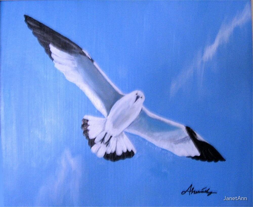 Blue Gull by JanetAnn