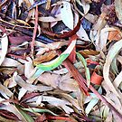 Leaves Disorganized II by Mike Solomonson