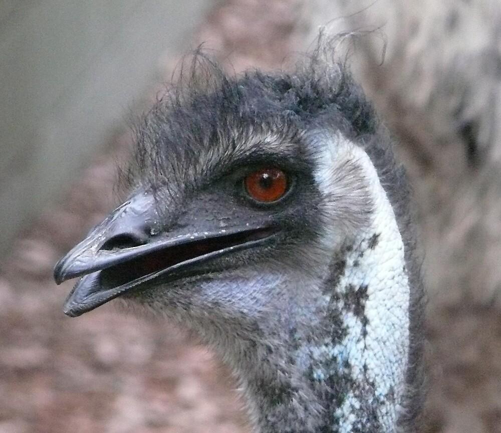 Emu Head by Tim Everding