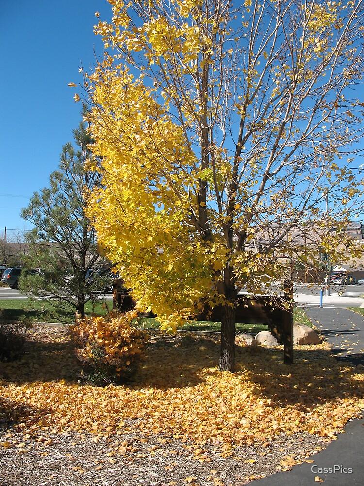 Golden Fall by CassPics