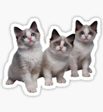 Kittens Sticker