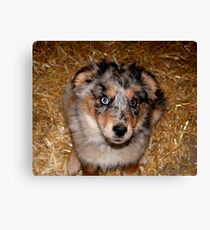 One more treat please!!! Canvas Print