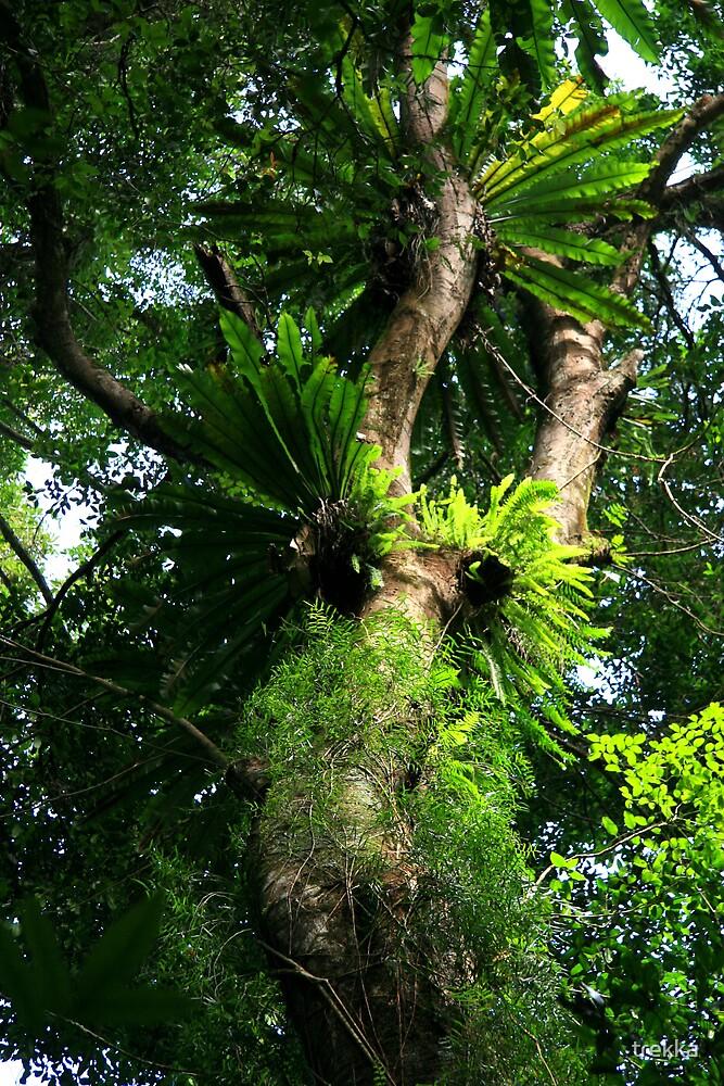 Rainforest Fig Tree by trekka