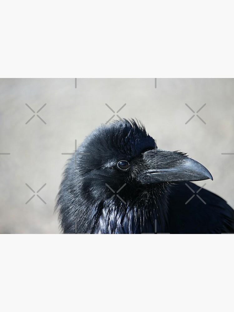 Raven by debfaraday