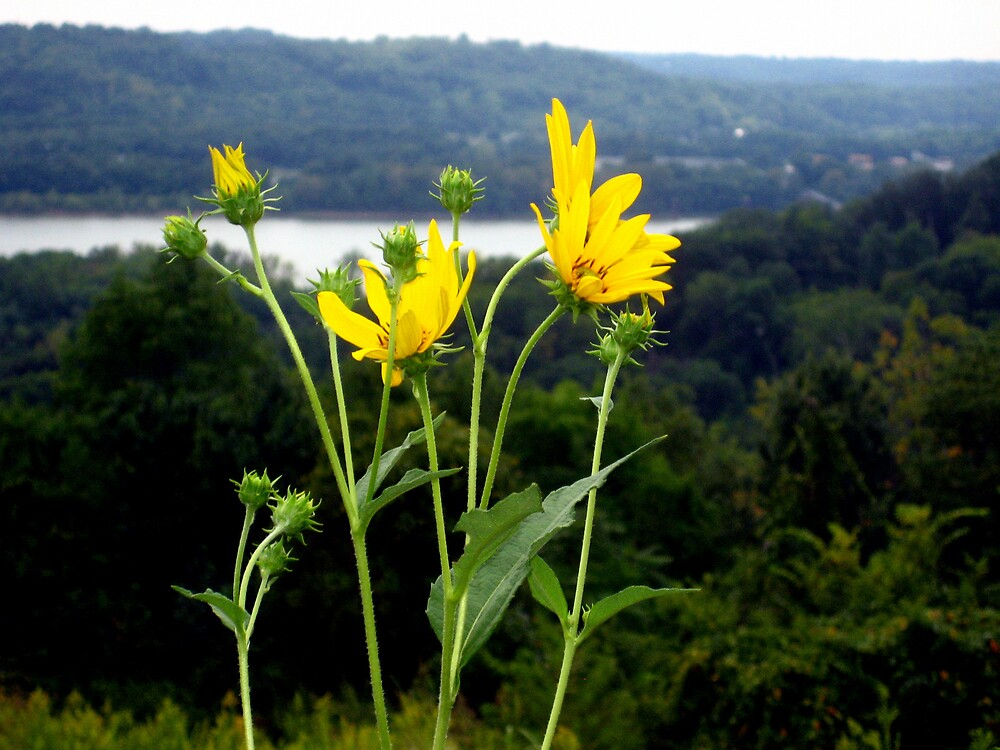 Wildflowers by junebug076
