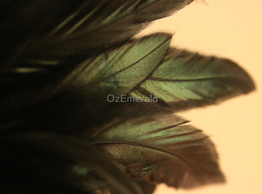 Feathers by OzEmerald