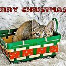 Merry Christmas Hiding Kitten by Coralie Plozza