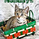 Happy Holidays Kitten by Coralie Plozza