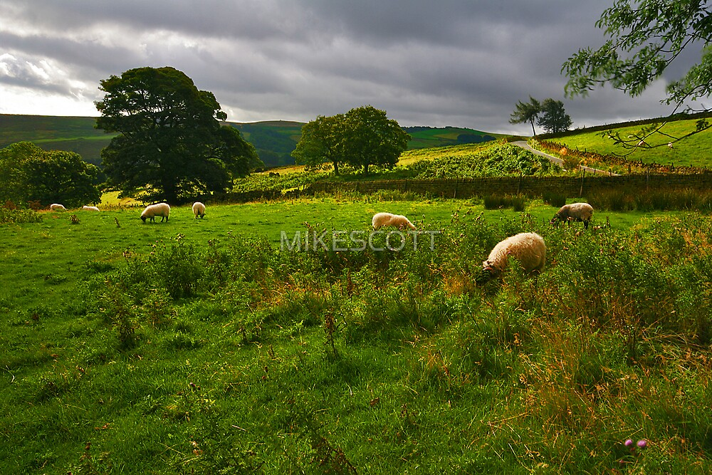 STRINES MOOR by MIKESCOTT