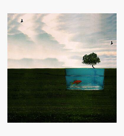 Fish Dreams Photographic Print
