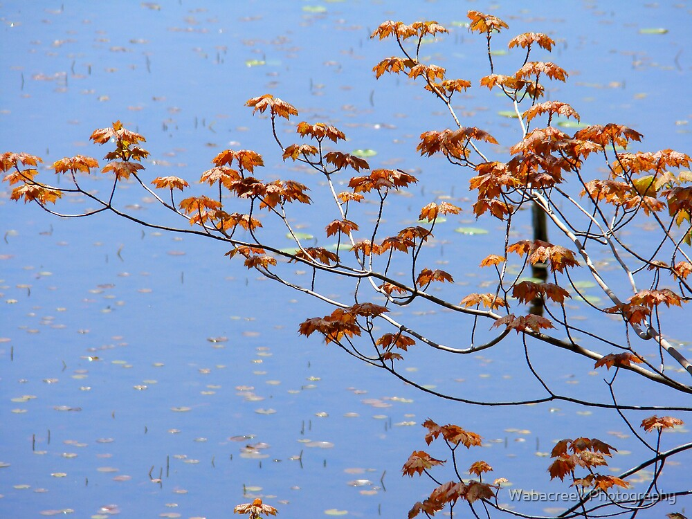 Branch against water by Jocelyne Phillips