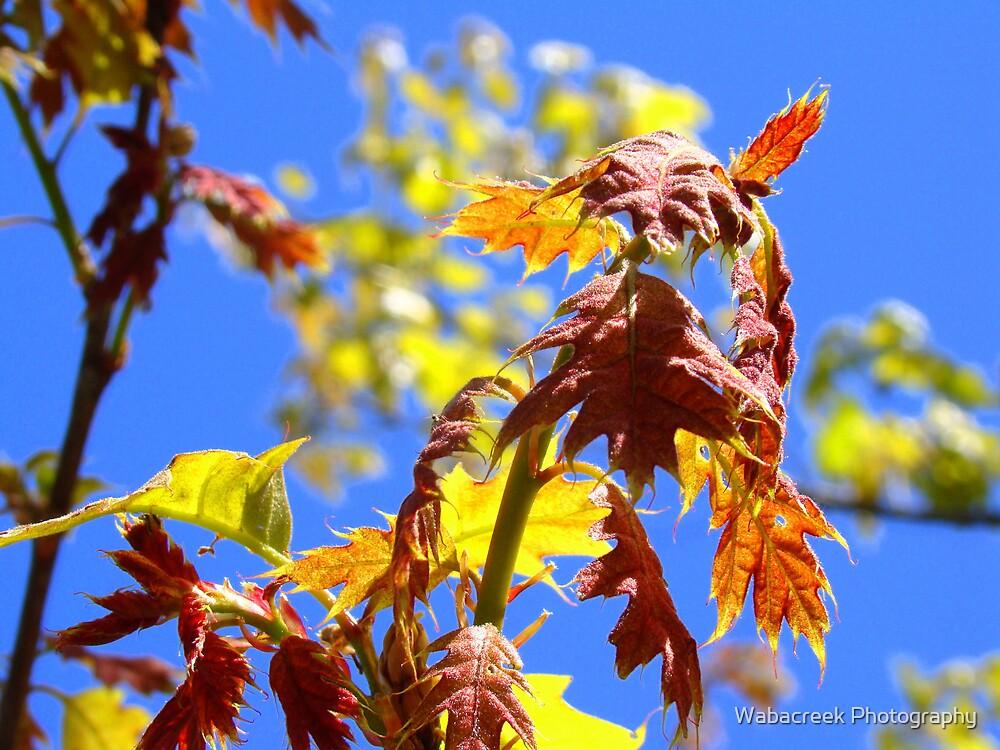 Colourful branch by Jocelyne Phillips