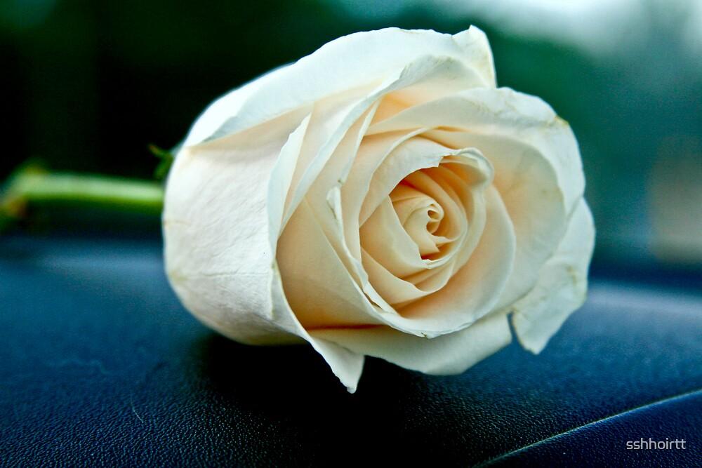 Rose by sshhoirtt