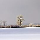 Wintry Day by Gary Lengyel