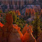 Good Morning Bryce Canyon by Shari Galiardi