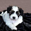 Puppy Love by Coralie Plozza