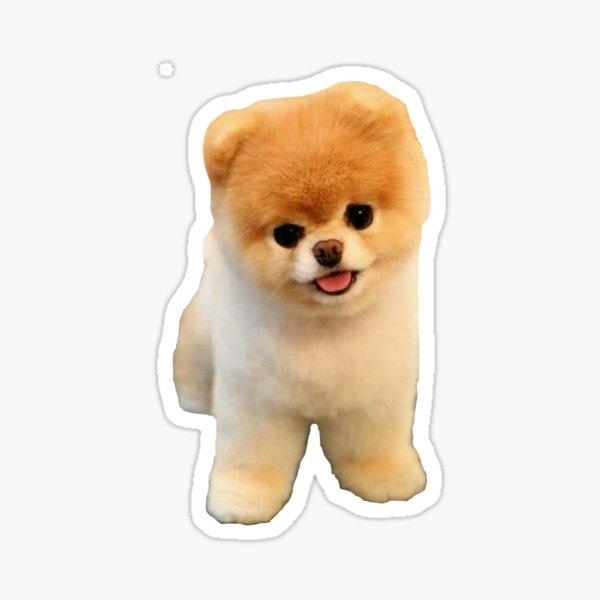 Cute Boo Puppy Sticker