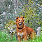 Dog in Springtime by Coralie Plozza