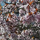 Spring Pink by Samantha Creary