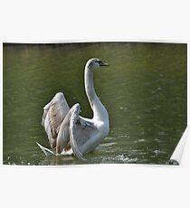 Swan Dance ~ Wrest Park, Bedfordshire ~ 2010 Poster