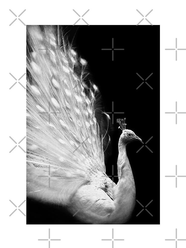 Peafowl portrait by AleFairyland