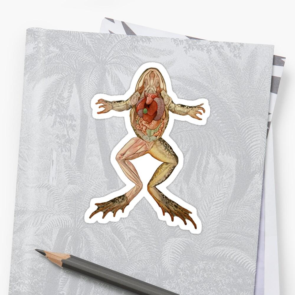 Pegatinas «Ilustración de anatomía de rana antigua» de monsterplanet ...
