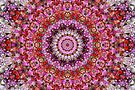 Red and Purple Floral Mandala by JanusianGallery