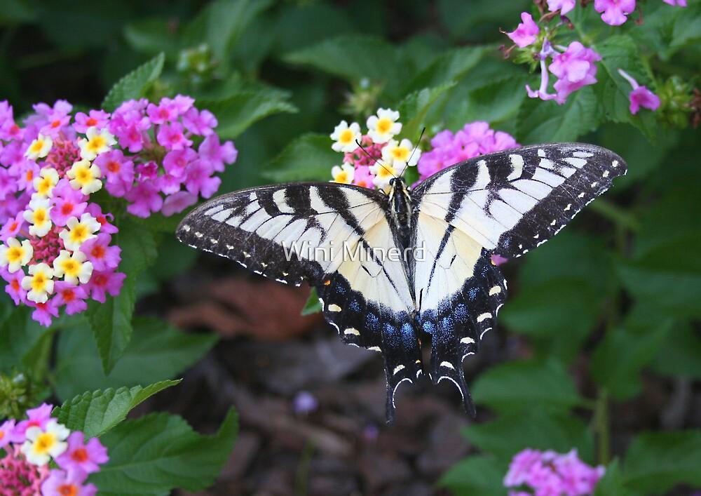Butterfly Dreams by Wini Minerd