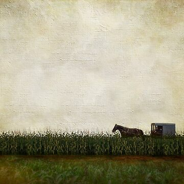 amish horse and buggy by AJ-artography