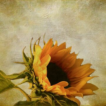 Yellow Sunflower by AJ-artography