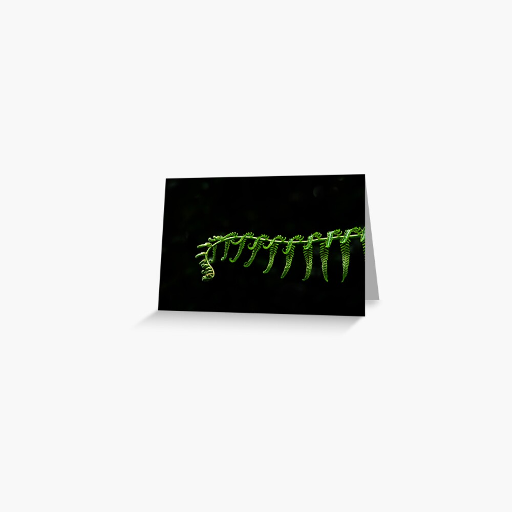 Fern Frond Greeting Card