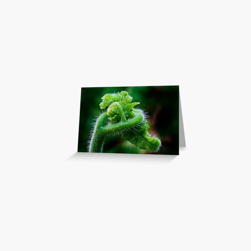 Fern Frond 2 Greeting Card