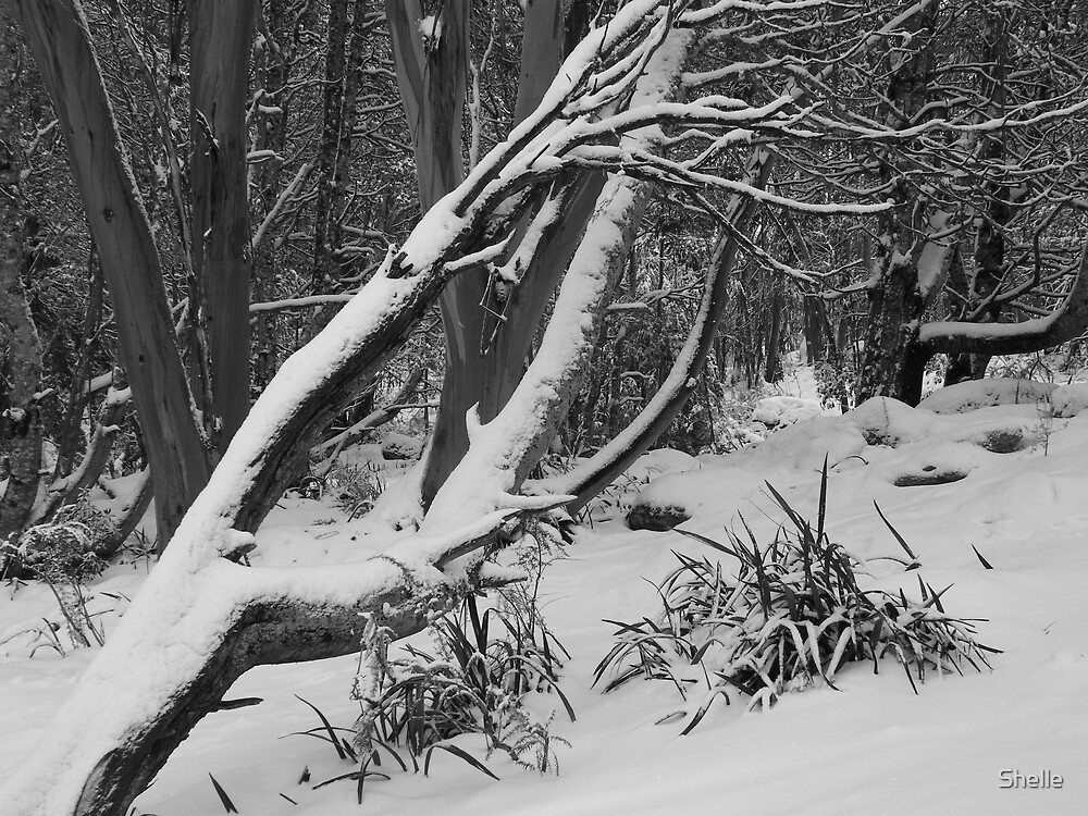 Bare snow by Shelle