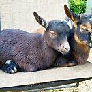 Double Goat Boat by Marla Riley