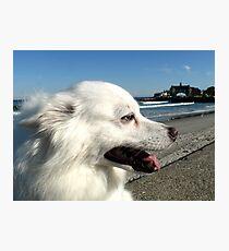 Sylvie at Narragansett Beach Seawall Photographic Print
