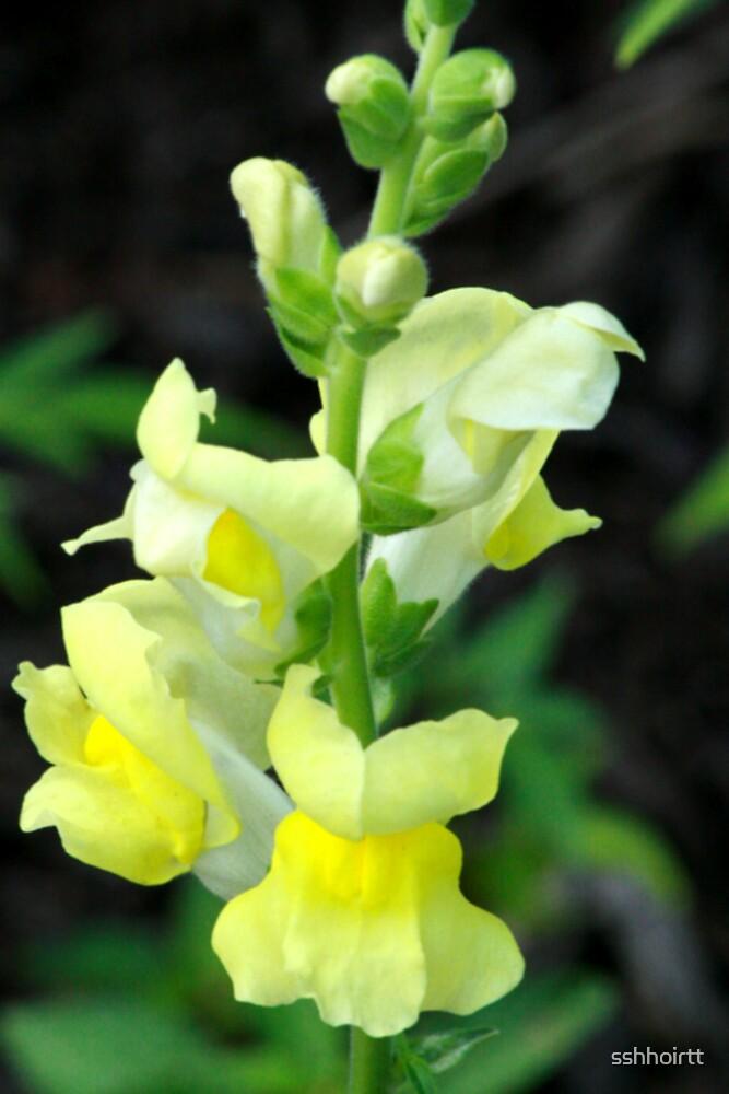 Soft Yellow by sshhoirtt
