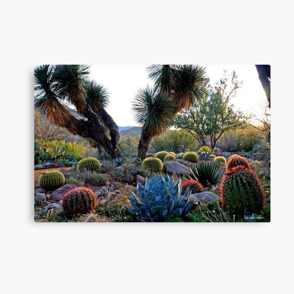 Desert Diversity Canvas Print