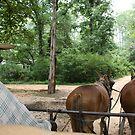 mule ride by Sheila McCrea